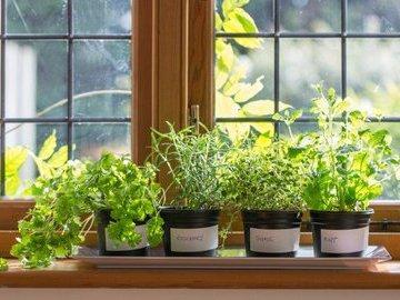 Комнатные растения - фильтры (часть 2)