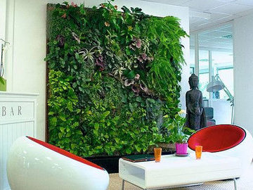 Озеленение квартиры: выбираем растение для каждой комнаты