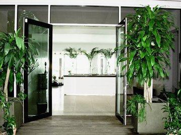 Комнатные растения украшают интерьер